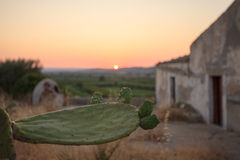 Sicily sunset. A suggestive view of a green prickly pear with the sunset in the background. Sicily, Italy stock photography