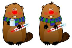 Sick beaver with thermometer and mug. On white background Royalty Free Stock Images