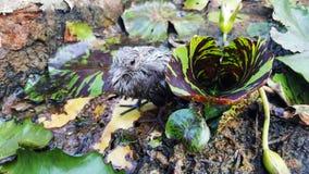 Sick Bird Royalty Free Stock Images