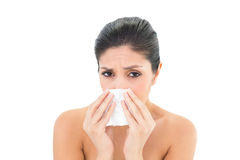Sick brunette blowing her nose Royalty Free Stock Photo