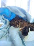 Sick cat Stock Photos