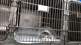 Sick cat is in a cage. At the veterinary clinic Royalty Free Stock Photos