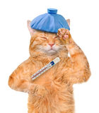 Sick cat. Royalty Free Stock Images
