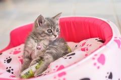 Sick cat leg splint Royalty Free Stock Images