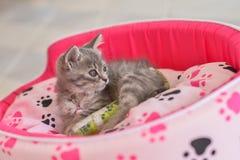 Sick cat leg splint Royalty Free Stock Photos