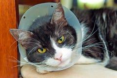 Sick cat Stock Image