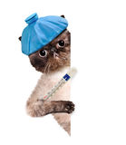 Sick cat. Stock Images
