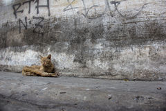 Sick cat sleeping on the dirty road stock photography
