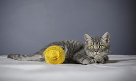 Sick cat on a table with medicines Stock Photography