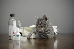 Sick cat on a table with medicines Stock Photos