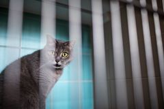 Cat waiting for treatment in cage of veterinarian clinic royalty free stock images