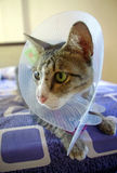 Sick cat wearing protective collar Stock Photography