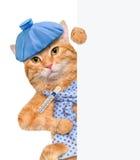 Sick cat. Stock Images