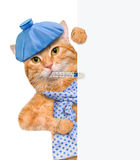 Sick cat. Stock Photography