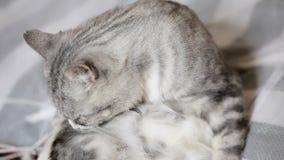 Sick Cat stock video footage