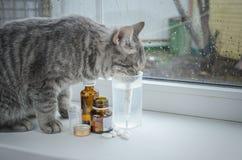 Sick cat on a window near the medicines. A sick cat on a window near the medicines Stock Photo
