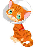 Sick Cute Kitten Royalty Free Stock Photo