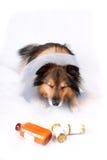 Sick dog Royalty Free Stock Image