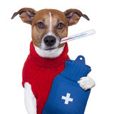 Sick dog. Sick ill cold dog  with fever and hot water bottle Stock Photos