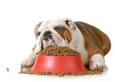 Free Sick Dog Stock Photography - 29232852