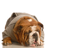 Sick dog Royalty Free Stock Photography