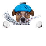 Sick dog with fever Royalty Free Stock Photos