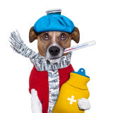 Sick dog with fever. And a hot water bottle Stock Image