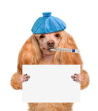 Sick dog. Royalty Free Stock Images