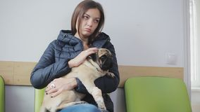 Sick dog pug with bandaged paw in line at veterinary clinic. Girl holds a sick dog in her arms. Strokes, regrets. Close-up stock video