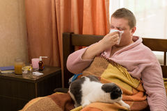 Sick guy lying in the bed with fat cat and blowing Royalty Free Stock Photography