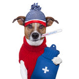 Sick ill cold dog. With fever and hot water bottle Stock Photo