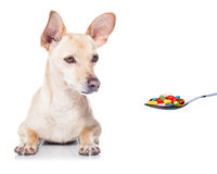 Sick ill dog Stock Photos