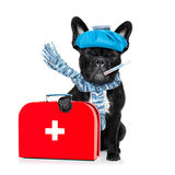 Sick ill dog Stock Photography