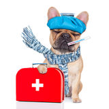 Sick ill dog Stock Images