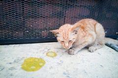 Sick ill pet cat with vomit on floor. Needs help Royalty Free Stock Photos