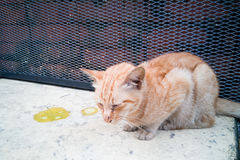 Cat vomiting stock image. Image of quirky, ginger, outdoor ...