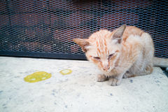 Sick ill pet cat with vomit on floor. Needs help Stock Photo