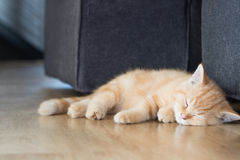 Sick kitten get cat flu and sleeping Royalty Free Stock Image