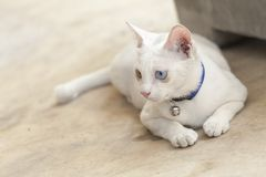 Cat. Sick little cat aids cat Royalty Free Stock Photography