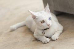 Cat. Sick little cat aids cat Royalty Free Stock Images