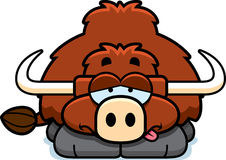 Sick Little Yak Royalty Free Stock Images