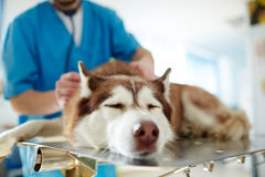 Sick pet Stock Photo