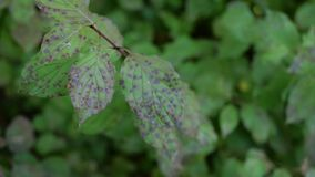 Sick plant. In Autumn with green background stock photography