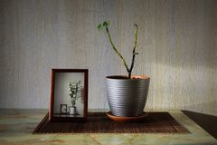 Sick plant in the pot near a frame with picture of blooming orchids. On the table in the room Stock Images