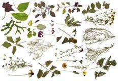 Sick plants isolated set. Sluggish dry and sick plants big isolated set royalty free stock photo