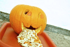 Sick pumpkin. Vomiting with seeds royalty free stock image