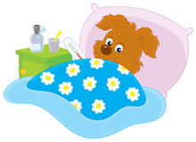 Sick puppy. Ill pup lying in his bed with a thermometer, vector illustration Stock Photography