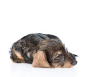 Sick puppy. isolated on white background Royalty Free Stock Images