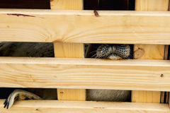 Sick seal in wooden gage. Ready to release in nature. Stock Photos