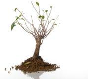 Sick tree. Small sick tree, environment concept Stock Image